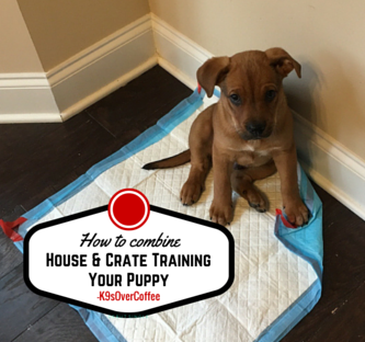 K9sOverCoffee | How To Combine House & Crate Training Your Puppy