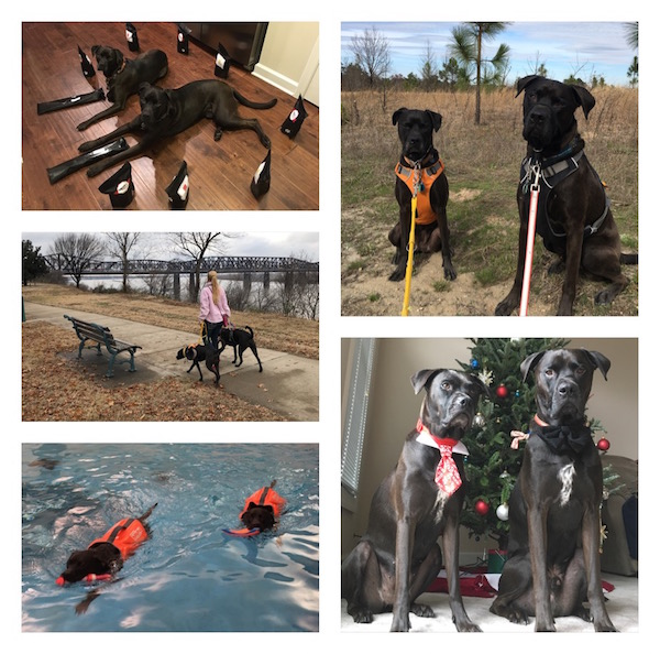 K9sOverCoffee | The blog K9sOverCoffee features my two boxer mixes Missy & Buzz