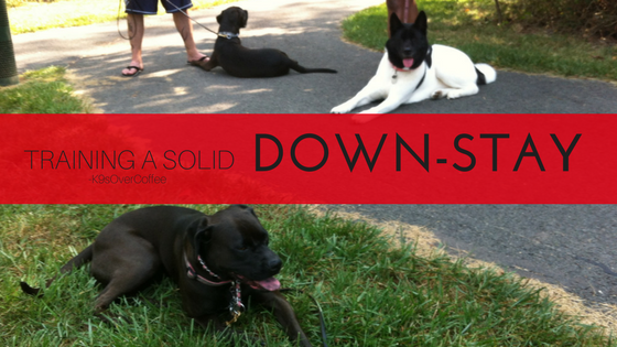 K9sOverCoffee | How To Train A Solid Down-Stay Command