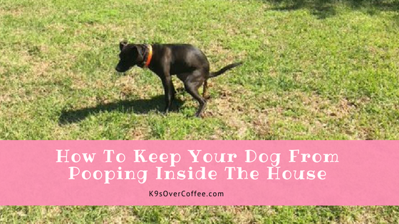 how to stop your dog from pooping in the house