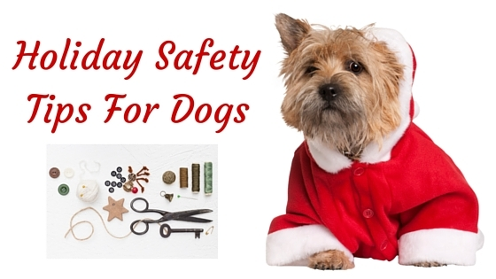 K9sOverCoffee   Holiday Safety Tips For Dogs