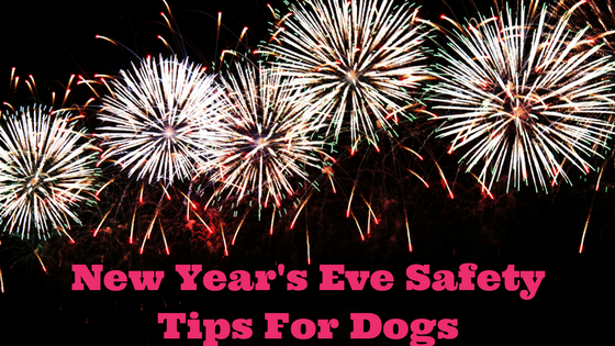 K9sOverCoffee | New Year's Eve Safety Tips For Dogs