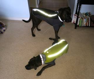 K9sOverCoffee | Ruffwear's Cloud Chaser Jacket Comes With Reflective Trimming