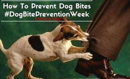 #DogBitePrevention Week: How to Prevent Dog Bites