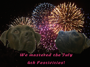 K9sOverCoffee | Our Dogs Mastered the July 4th Activities!