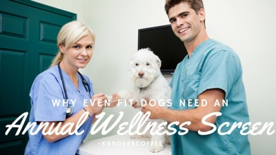 K9sOverCoffee | Why Even Fit Dogs Need An Annual Wellness Screen