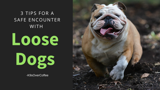K9sOverCoffee | 3 tips for a safe encounter with loose dogs