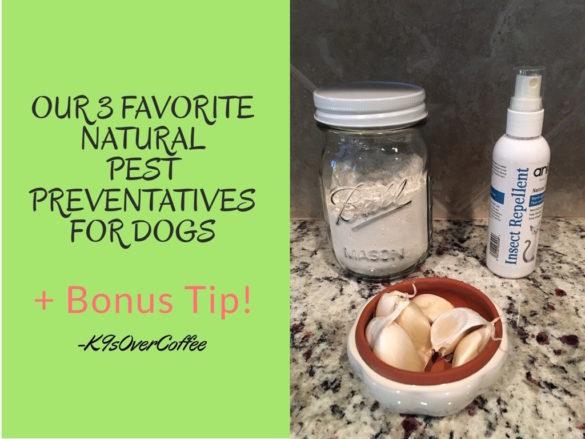 K9sOverCoffee | Our 3 Favorite Natural Pest Preventatives For Dogs + Bonus Tip