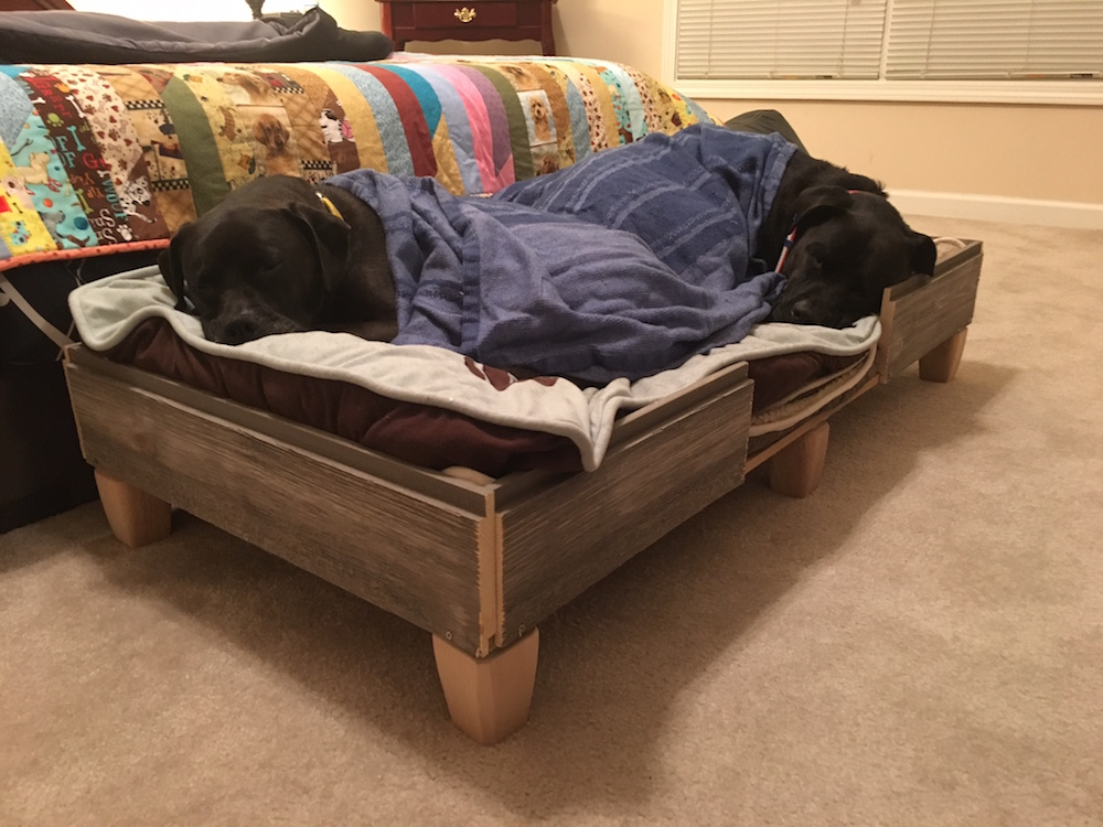 k9sovercoffee missy buzz snoozing in their rustic diy dog bed framejpeg - Dog Bed Frame