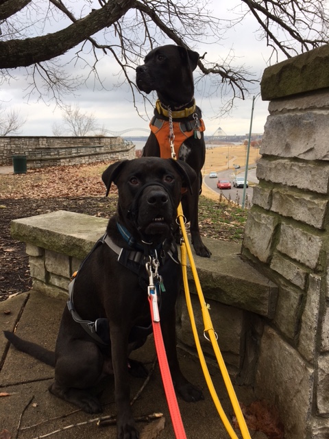K9sOverCoffee | Walking in Memphis with 2 dogs in tow - Missy & Buzz taking a break on our walk along the Mississippi