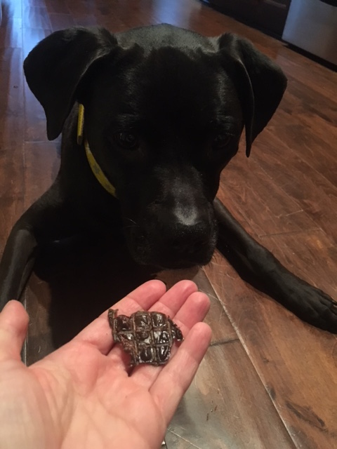 K9sOverCoffee | What's Inside Our Real Pet Food Treat Subscription Box This Month? - Chicken Livers
