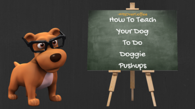 K9sOverCoffee | How To Teach Your Dog To Do Doggie Pushups
