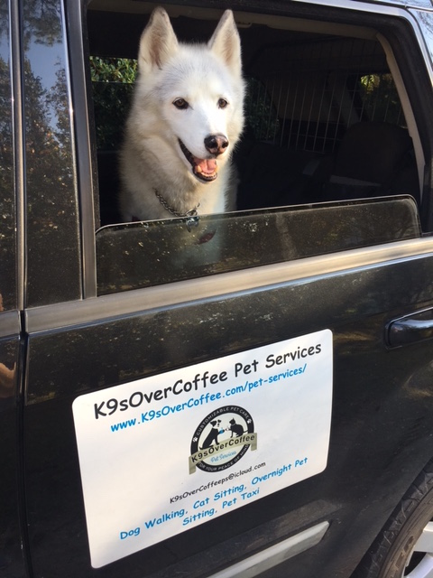 K9sOverCoffee | Tools Of A Dog Walker - A Glimpse Behind The Scenes:My Car