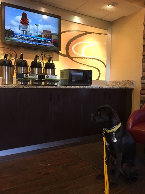 K9sOverCoffee | Winter Getaway to Hilton Head Island's Dog-Friendly Red Roof Inn - 24/7 Coffee And Tea In The Lobby