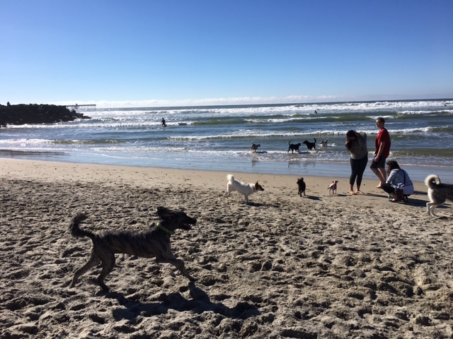 K9sOverCoffee | Dog-Friendly Things To Do In San Diego - Happy K9s at Original Dog Beach