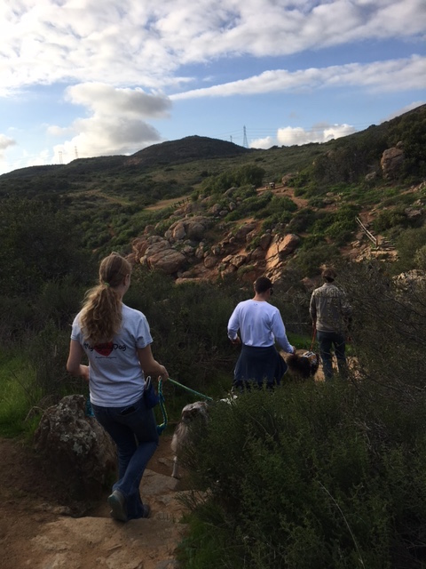 K9sOverCoffee | Dog-Friendly Things To Do In San Diego - Hiking At Los Peñasquitos