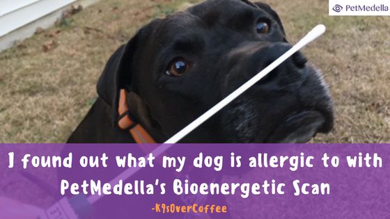 K9sOverCoffee | I found out what my dog is allergic to with PetMedella's Bioenergetic Scan