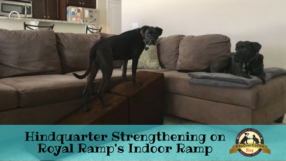 K9sOverCoffee | Hindquarter Strengthening On Royal Ramp's Indoor Ramp