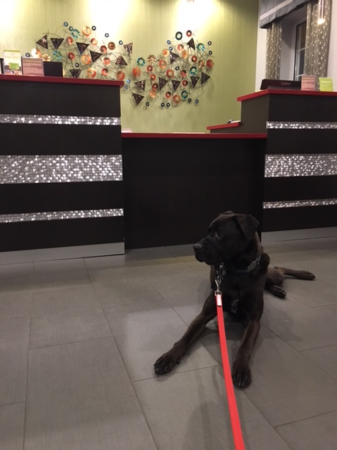K9sOverCoffee | Our First Experience At Pet-Friendly La Quinta Inns & Suites - Buzz At The Reception