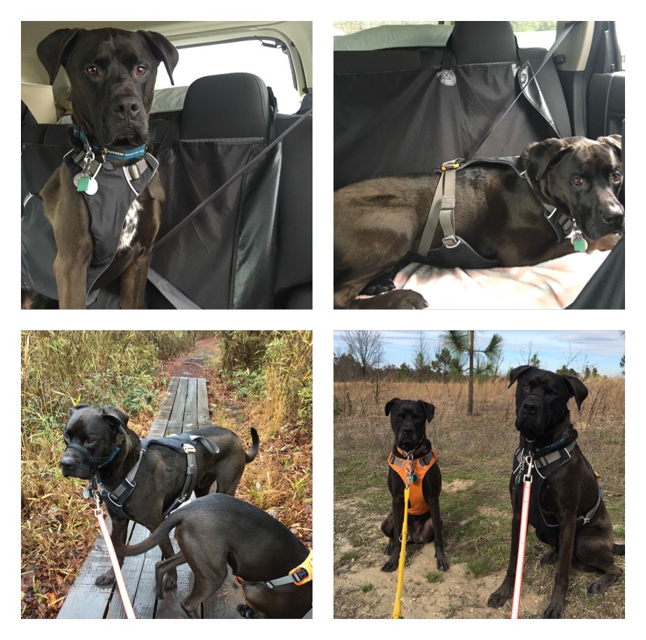 K9sOverCoffee | Ruffwear's Front Range vs Load Up Harness - Which One Is Better? - Load Up Car Harness