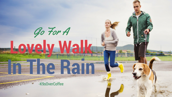 K9sOverCoffee | Go For A Lovely Walk In The Rain
