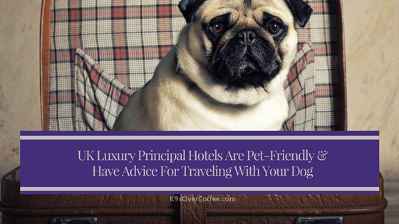 K9sOverCoffee | UK Luxury Principal Hotels Are Pet-Friendly & Have Advice For Traveling With Your Dog
