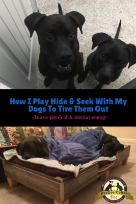 K9sOverCoffee Blog | How I Play Hide & Seek With My Dogs To Tire Them Out