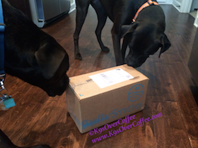 Our_dogs_sniffing_their_bestbullysticks_package