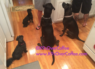 rsz_4_black_dogs_waiting_for_treats