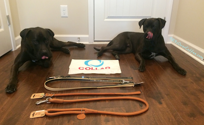 Missy_and_Buzz_with_CoLLar_Leather_collars_leashes
