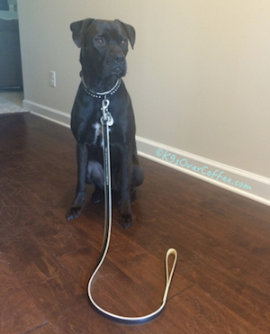 Missy_with_CoLLar_leather_collar_leash