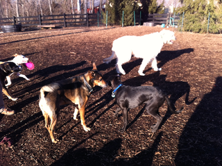 rsz_socializing_at_dogpark