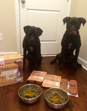 K9sOverCoffee  Buzz anticipating his raw dog food consisting of Darwin's Raw Mixed With THK Grain-Free Base Mix Preference
