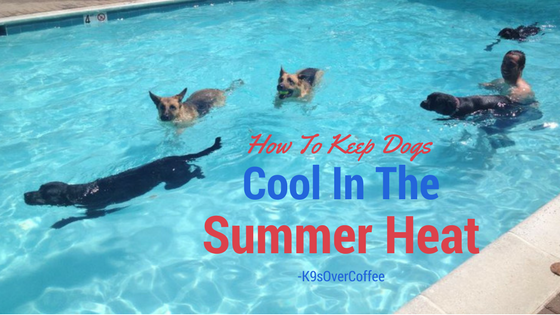 K9sOverCoffee | How To Keep Dogs Cool In The Summer Heat