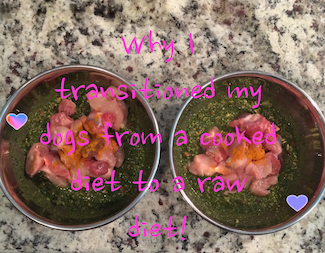 Why I Started Feeding Our Dogs A Raw Diet