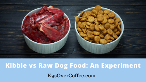K9sOverCoffee | Kibble vs raw dog food: An Experiment