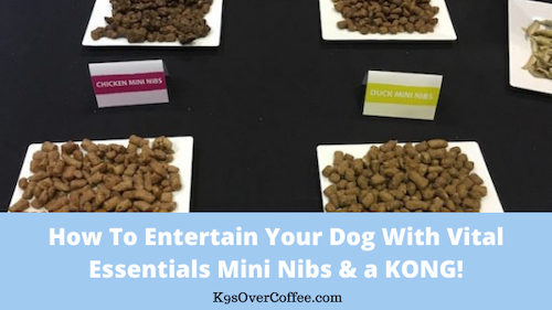 K9sOverCoffee | How to entertain your dog with Vital Esentials Mini Nibs & a KONG