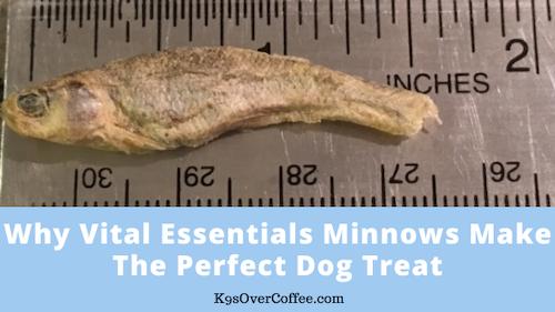 K9sOverCoffee | Why Vital Essentials Minnows Make The Perfect Dog Treat