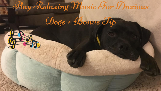 K9sOverCoffee | Play Relaxing Music For Anxious Dogs + Bonus Tip