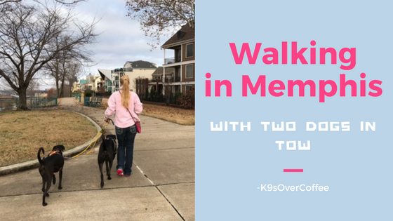 K9sOverCoffee | Walking in Memphis With Two Dogs In Tow
