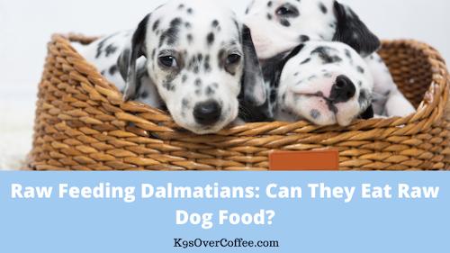 K9sOverCoffee | Raw Feeding Dalmatians: Can They Eat Raw Dog Food?