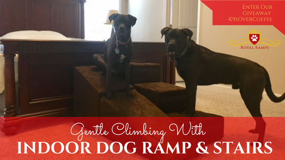 K9sOverCoffee | Gentle Climbing With Indoor Dog Ramp & Stairs + Giveaway