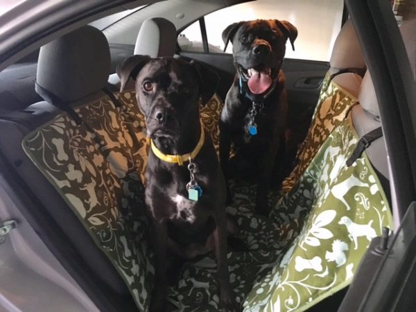 K9sOverCoffee | Our stylish new car hammock from Molly Mutt!