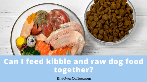 K9sOverCoffee | Can I feed kibble and raw dog food together?