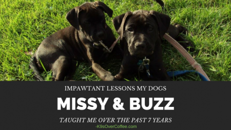 K9sOverCoffee.com   Impawtant Lessons My Dogs Missy & Buzz Taught Me Over The Past 7 Years