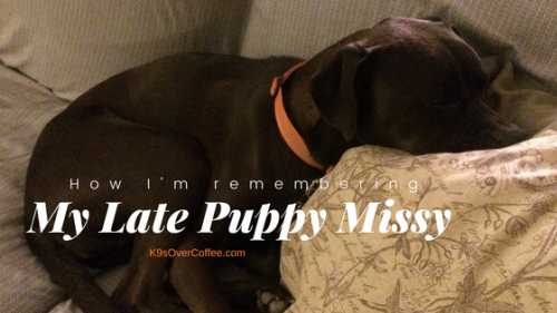K9sOverCoffee | How I'm Remembering My Late Puppy Missy