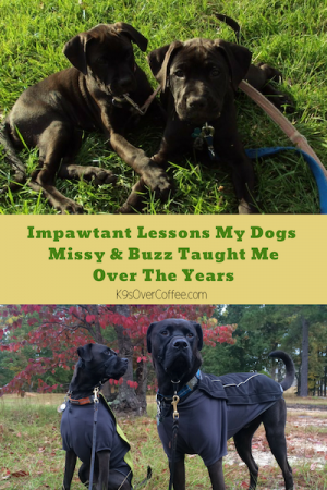 K9sOverCoffee   Impawtant Lessons My Dogs Missy & Buzz Taught Me Over The Years