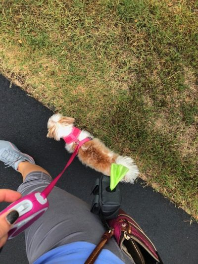 K9sOverCoffee   Mighty Paw's Poop Bag Holder Clipped To My Cross-Body Purse While Walking Client Dog Madison