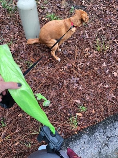 K9sOverCoffee   Mighty Paw's Poop Bag Holder Features An Easy Access Slot