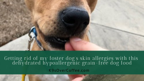 K9sOverCoffee | Getting rid of my foster dog's skin allergies with this dehydrated hypoallergenic grain-free dog food